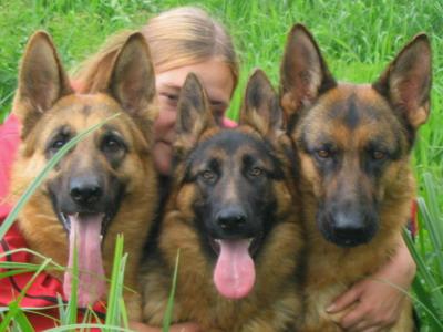 Корма для мелких пород собак - отзывы ветеринаров и